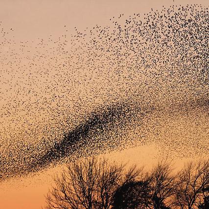 Foto eines Vogelschwarms im Sonnenuntergang.