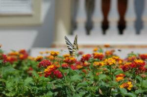 Foto von roten und gelben Blumen und oben darauf sitzt ein Schmetterleing
