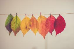 Foto mit Blättern in Herbstfarben, die an einer Schnur neben einander hängen