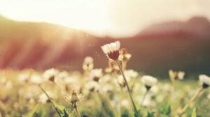Foto mit einer Blumenwiese und die Sonne leuchtet im Hintergrund