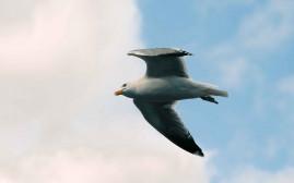 Foto mit einer fliegenden Möwe