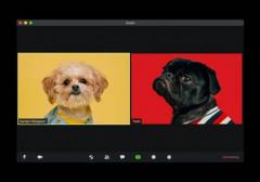 Foto mit einem Computerbildschirm von Zoom mit zwei Hunden darin